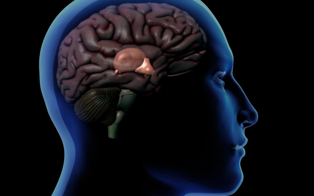 Faisons le point sur l'hypothalamus