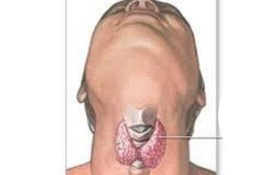 Faisons le point sur la thyroïde